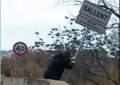 Indignación por el ingreso en prisión del catalán que arrancó un cartel separatista en Sallent (Barcelona)