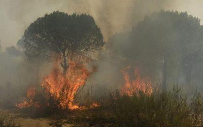 España, el incendio del paraje 'La Peñuela' ya estáen Espacio Natural Doñana, más de 2 mildesalojados