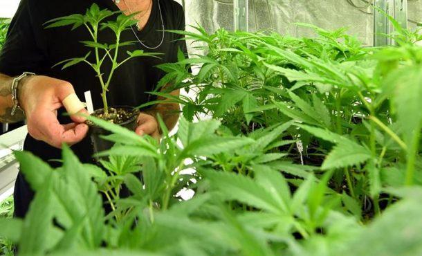 """Fumar porros es dañino, """"la mezcla de tabaco y cannabis es generalizada en España"""""""
