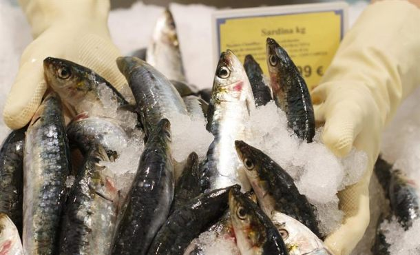 """""""Ya están aquí"""", algo muy corpóreo y delicioso: las sardinas. Sí, ya están aquí"""