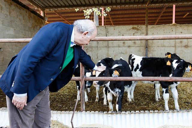 El ministro de Interior y cabeza de lista del PPC, Jorge Fernándo Díaz, al 20D con las vascas y cabras hoy en Lérida. Lasvocesdelpueblo.