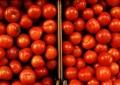 """Laboratorio de Sanidad Vegetal ratifica la presencia del """"etefón"""", prohibido en tomates de Almería"""