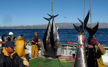 Una compañía de cría de pescados contrata a un buzo para estafar 1,7 millones en atunes