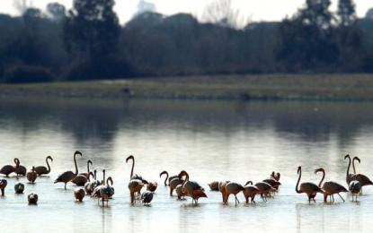 Andalucía con mayor superficie incluida en «Red Natura 2000»:198 espacios, 2,6 millones de hectáreas