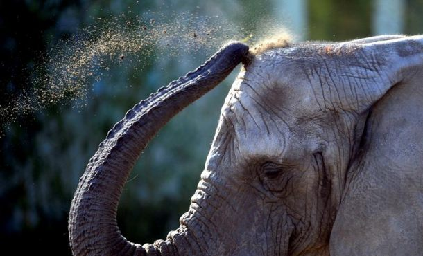 Un elefante mata a un turista españolen el parque natural de Chebera-Churchura (Etiopía)
