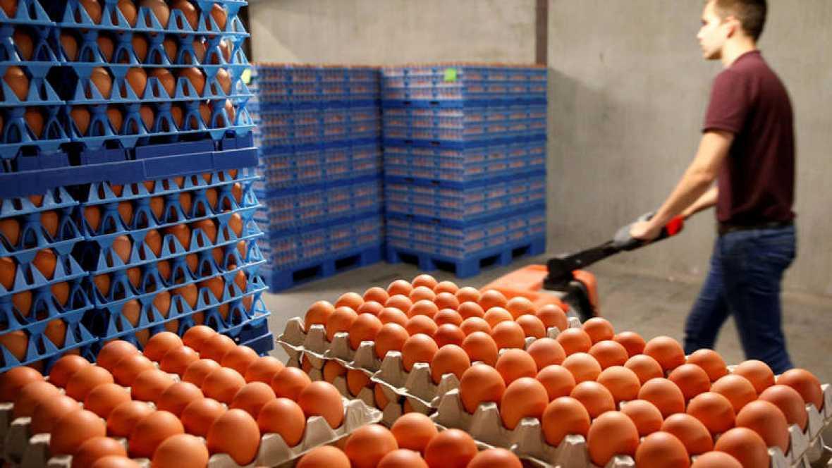 Inmovilizan 20 mil unidades de huevo líquido contaminado con fipronil en Vizcaya