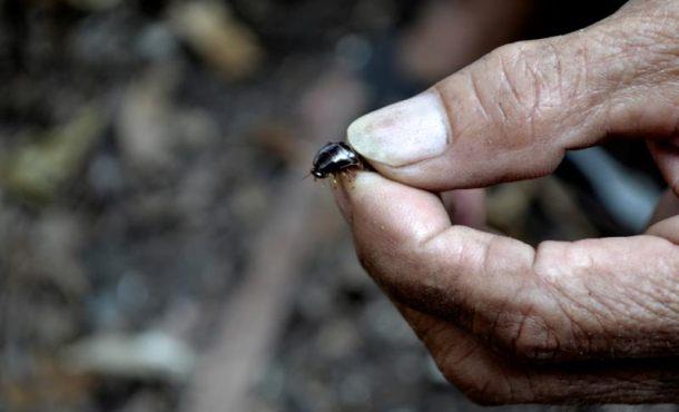 El extraño trabajo de cazador de cucarachas