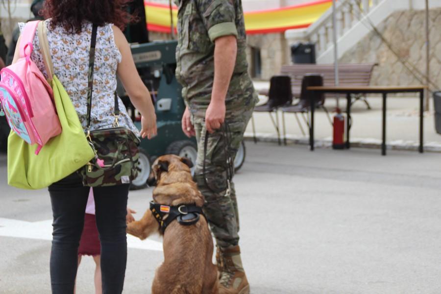 Mira lo que hace la Unidad Canina del Ejército español en Cataluña