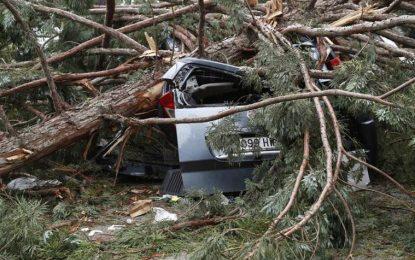 2 heridos de gravedad al caer una rama de árbol en campus de Universidad de Navarra