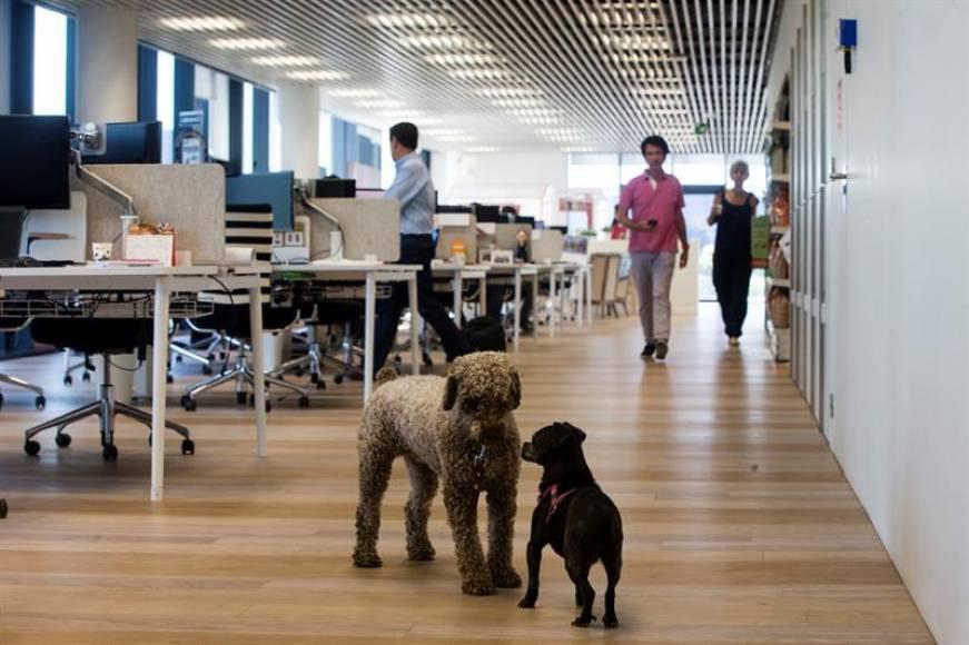 Llevar perro y gato al trabajo y hacer compatible la jornada laboral con su cuidado