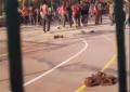 "Llegan a España 200 migrantes a gritos de ""boza, boza"" (victoria) tras saltar la valla de Melilla"