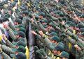 Al menos 20 muertos en un atentado contra la Guardia Revolucionaria iraní